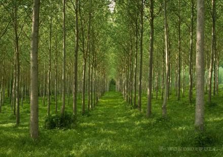 Italy Magic Wood